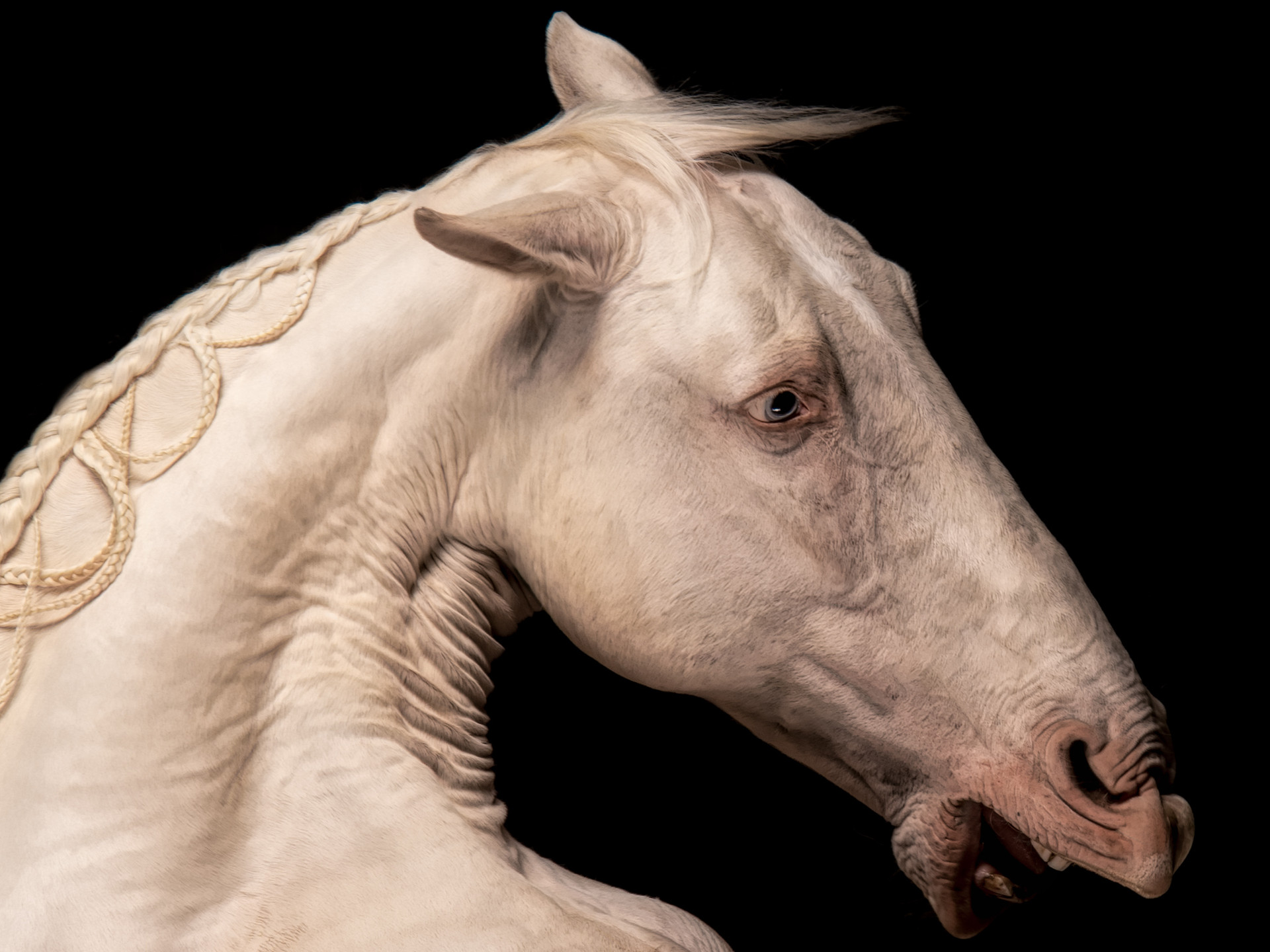 Toureiro (Bullfighter)
