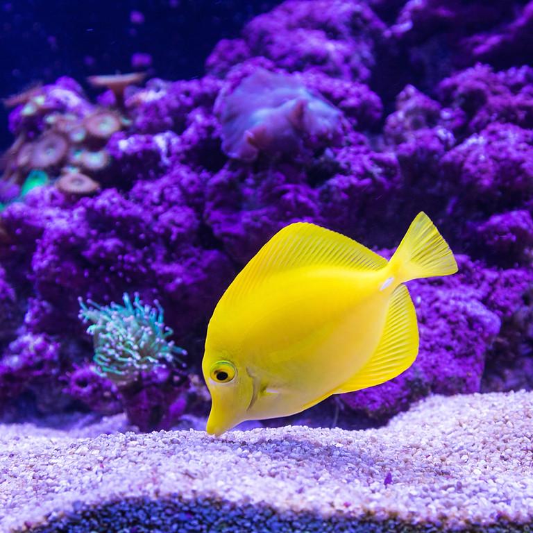 Oklahoma Aquarium Afternoon