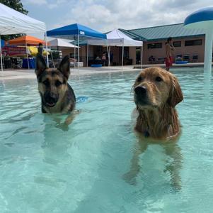 Dog Days of Summer Swim Pawty