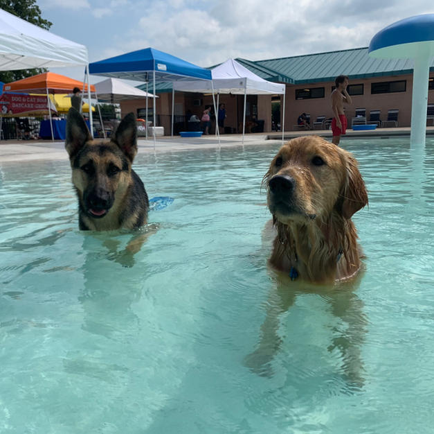 Dog Days of Summer Swim Pawty