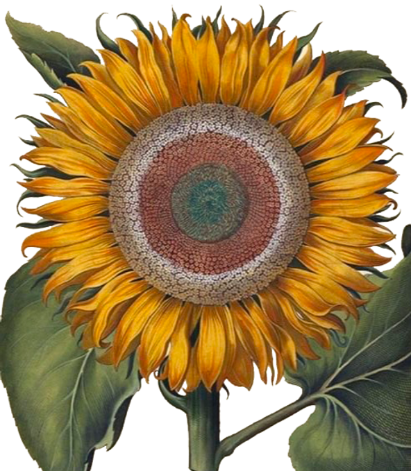 fleur logo galerie.png