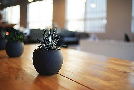 plant-1081856__340.jpg