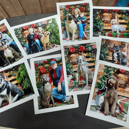 Check Out Our Pet Portrait Pictures!