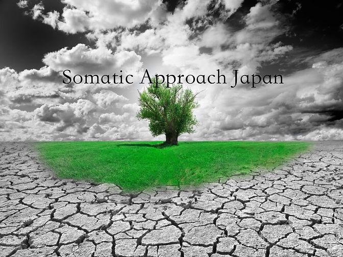 somaticapproach.jpg