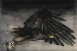 White-taled eagle