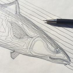 Mackerel sketch