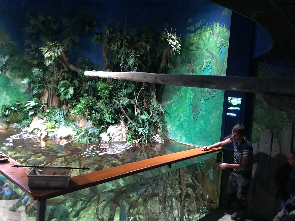©Grand Aquarium de Saint-Malo - nourrissage commenté Mangrove