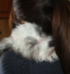 puppy talk consuting boston