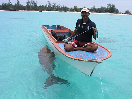 Hello to Dugong.jpg