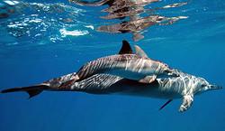 dolphin-tour-zanzibar
