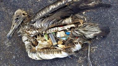 The Island of Trash (13).jpg