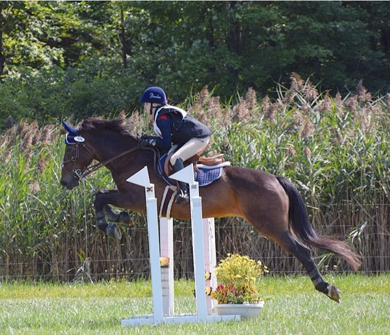 MEquestrian Solutions At Another Eventing Trial!