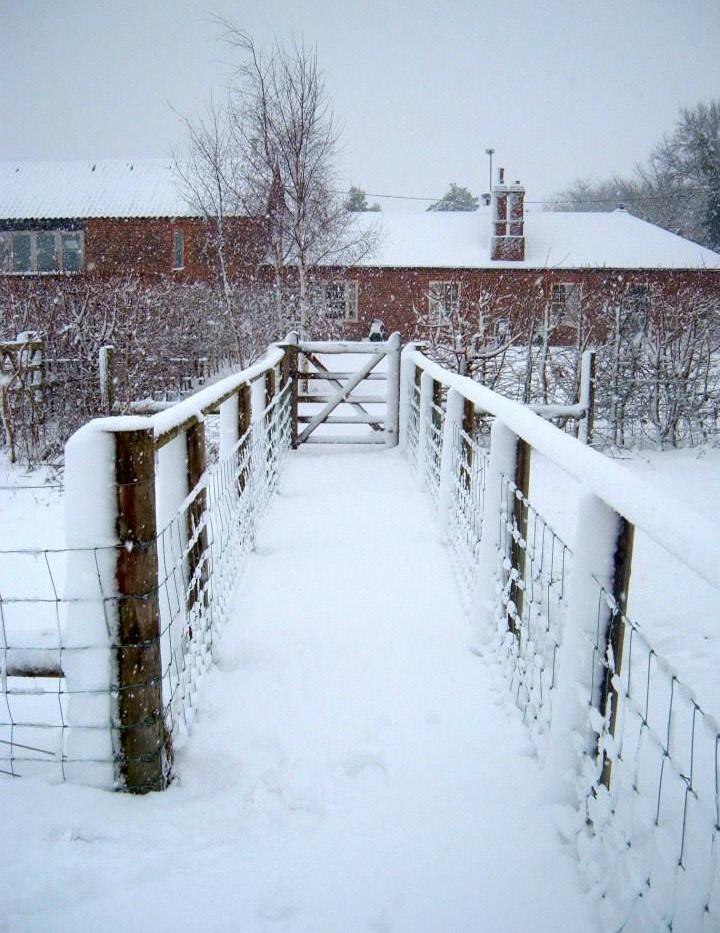 Snow Cottage.jpg