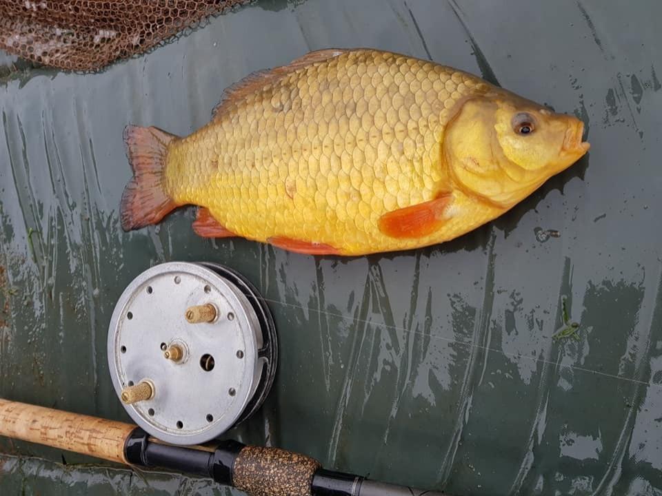 Fish 6_edited.jpg
