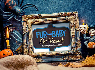 Fur Baby Pet Resort.jpg