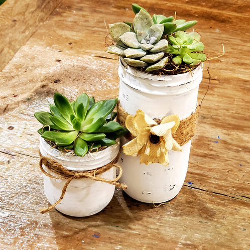 Mason Jar Succulent Collection