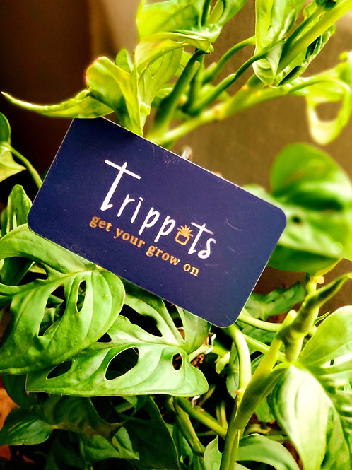 Trippots' Gift Card! $30