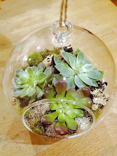 Succulent Hanging Globe