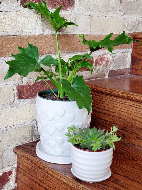 "The ""New Plant Parent"" Kit"