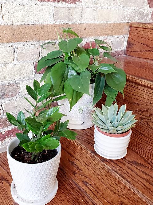 """The """"Professional"""" Plant Bundle"""
