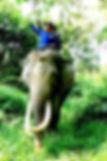 Elephant Forest Patrol Aras Napal