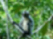 Satwa di Taman Nasional Gunung Leuser