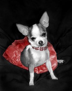 Fiona Ballerina: A Doggy Degas