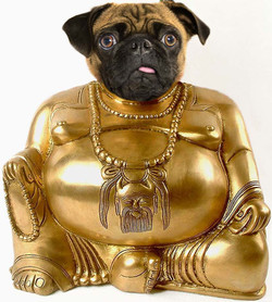 Pug Buddha