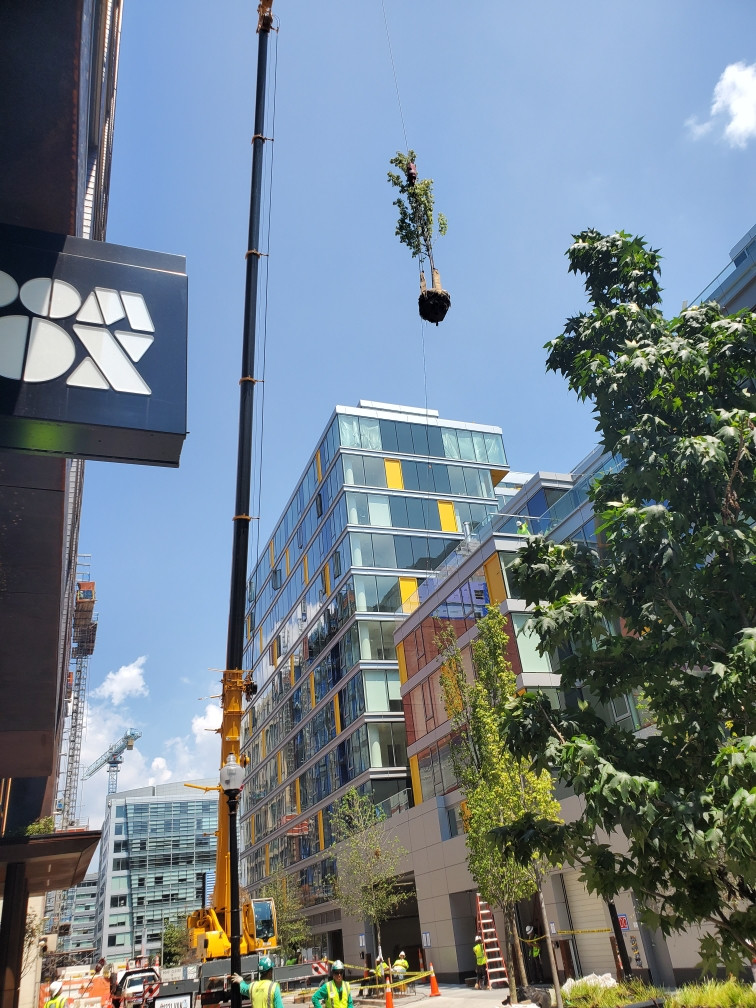 trees being airlifted onto top of building in DC