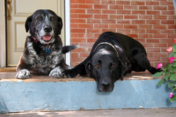 Dog Days On The Front Porch