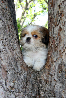 Puppy Up a Tree