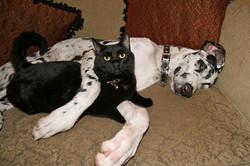 He LOVES His Cat (Ferdinand & Elvis)