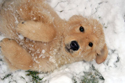 Daisy As a Seal Pup