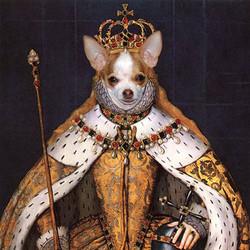 Chihuahua Queen Elizabeth