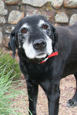 Old Dogs Are The BEST
