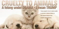 cruelty-to-animals-law-TrumpSuccess.jpg