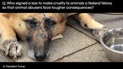 Q&A-Animal-abusersTrumpSuccess.jpg