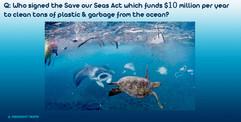 Q&A-TrumpSuccess-save-our-seas-turtle.jp