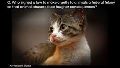Q&A-protect-animals-TrumpSuccess.jpg