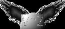 V^Z Official Logo