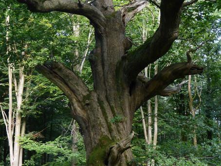 """Conférence """"L'arbre philosophe...en permaculture"""""""