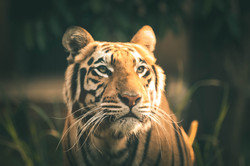 TigerEx