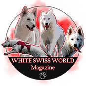 WSW Logo copy.png