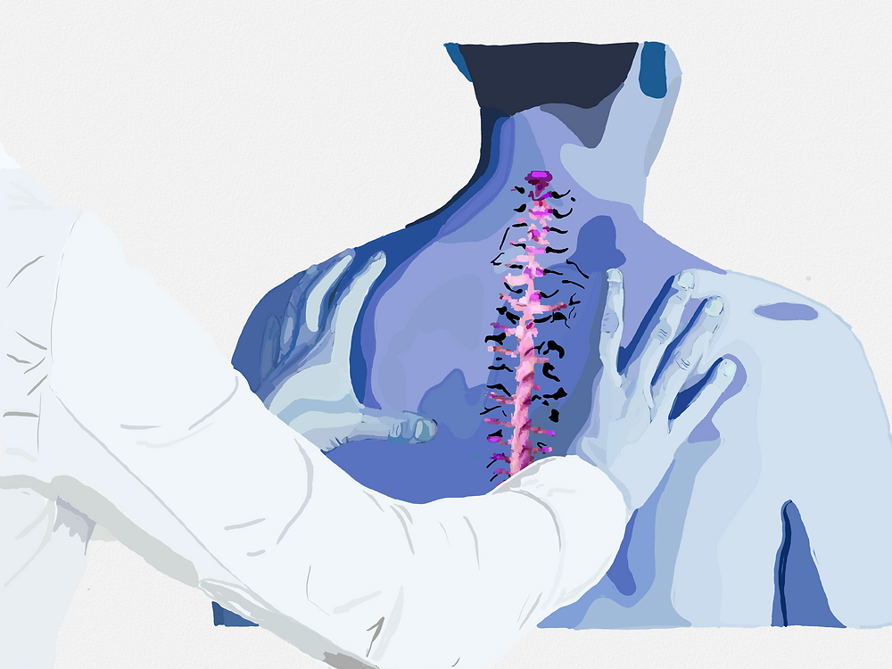 This image shows a version of an osteopathy practice. The spine is included to anatomically and aesthetically display muscle relief.