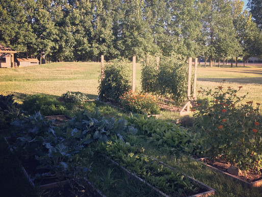 Jardineries, photographies et boréalité