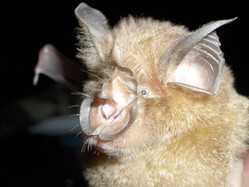 gREM models to estimate abundance from wildlife recordings