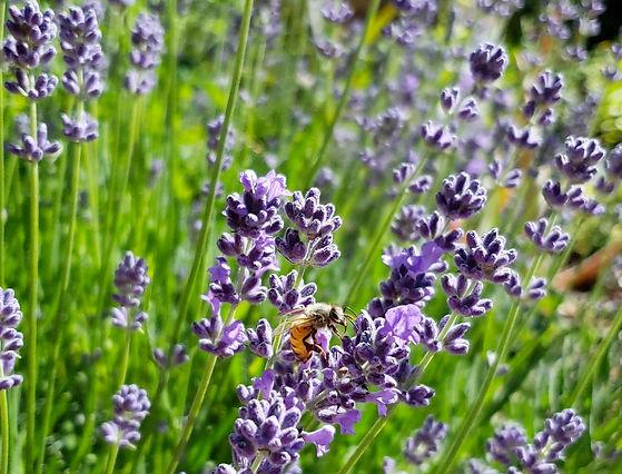 12-places-to-buy-seeds-pollinator-bee-la