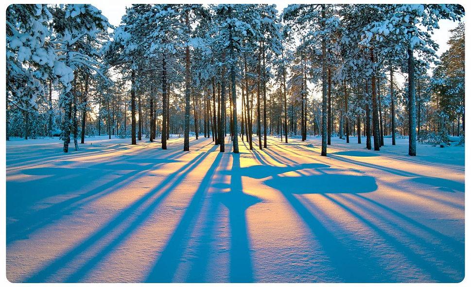 winterlandschaft-wald-schnee-wandtattoo-
