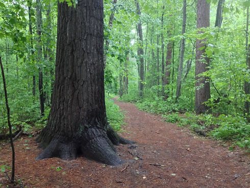 Forest Path Picture.jpg
