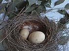 Egg small.jpg